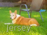 4488-Bella and Jersey-picture3