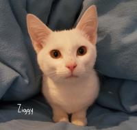 4629-Ziggy & Casper-picture2
