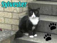 1066-Sylvester-picture1
