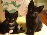 1276-Black Litter-picture0