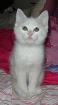 1069-Kittens-picture0